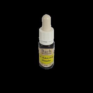 20. Bohócvirág Mimulus termék